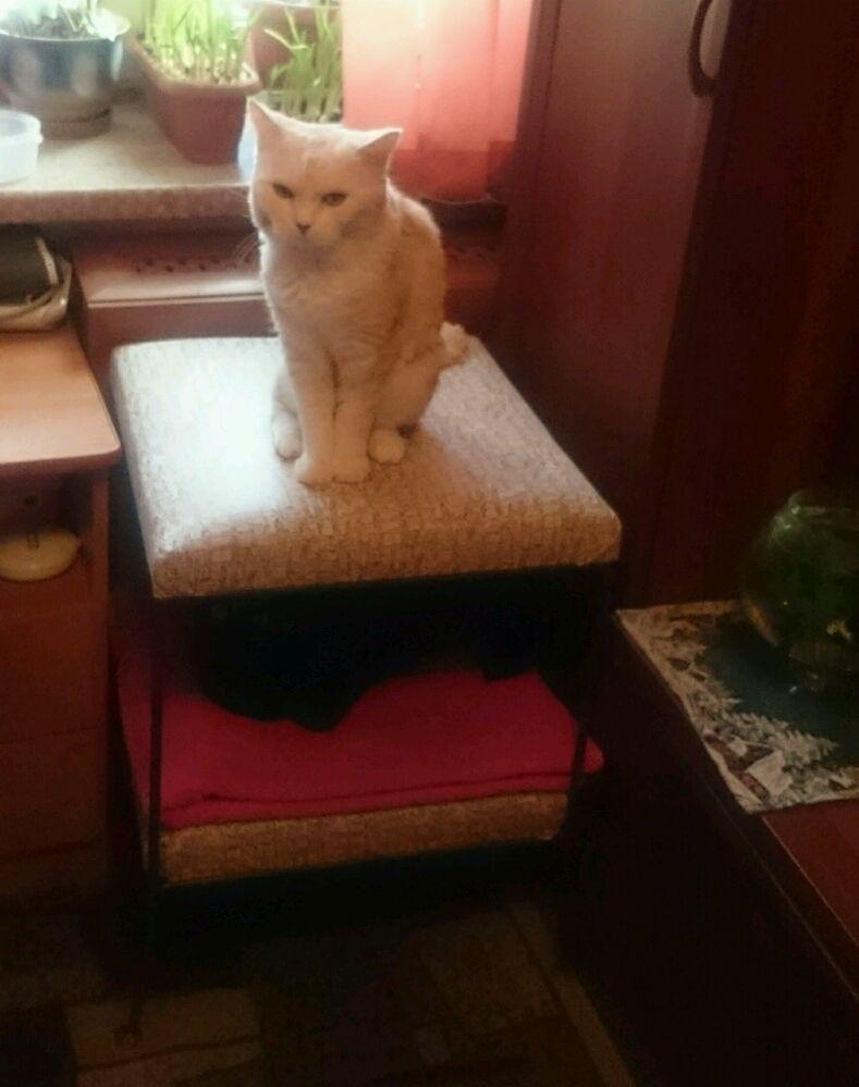 кованые лежанки для кошек в интернет магазине кованой мебели